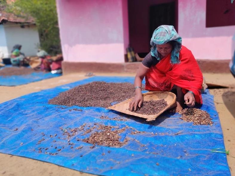 india, caffè solidale, caffè bio