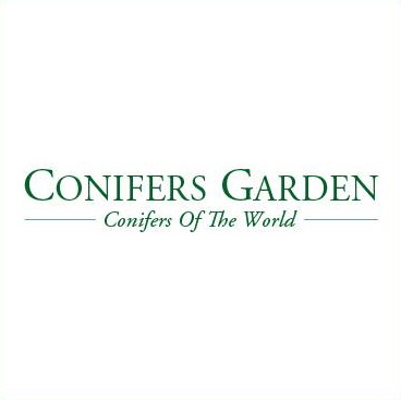 Conifers Garden, conifere